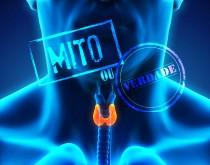 tireoide_mito